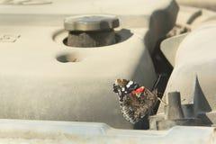 Schmetterling auf dem Automotor lizenzfreie stockbilder
