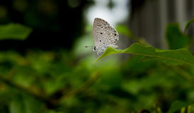 Schmetterling auf dem Blatt Stockbild