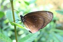 Schmetterling auf dem Blatt lizenzfreie stockfotos