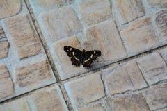 Schmetterling auf dem Boden Stockbild