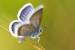 Schmetterling. Stockfotografie