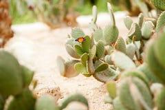Schmetterling auf dem Kaktus stockfotografie