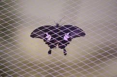 Schmetterling auf dem Netz stockbilder