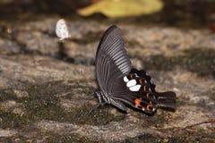 Schmetterling auf dem Salzsumpf lizenzfreies stockfoto