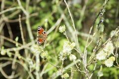 Schmetterling auf den Niederlassungen Stockbilder