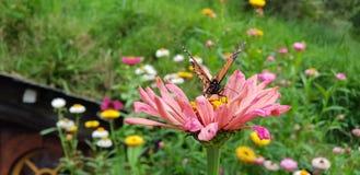 Schmetterling auf der Blume lizenzfreie stockfotos