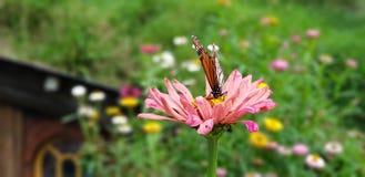 Schmetterling auf der Blume lizenzfreie stockfotografie