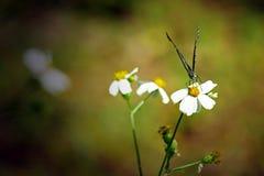 Schmetterling auf der Blume Stockbilder