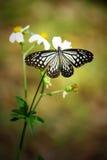 Schmetterling auf der Blume Lizenzfreies Stockfoto