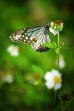 Schmetterling auf der Blume Lizenzfreies Stockbild