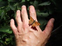 Schmetterling auf der Hand lizenzfreie stockfotos