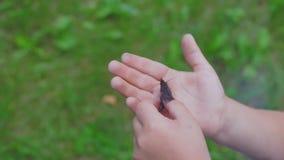 Schmetterling auf der Palme eines Kindes stock video footage