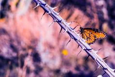 Schmetterling auf dorniger Niederlassung Lizenzfreies Stockbild