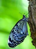 Schmetterling auf einem Baum Lizenzfreie Stockbilder