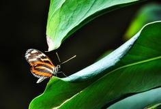 Schmetterling auf einem Blatt Lizenzfreie Stockfotografie