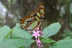 Schmetterling auf einem Blatt lizenzfreies stockbild