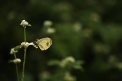 Schmetterling auf einem Blatt einer wild wachsenden Pflanze Stockbilder