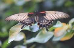 Schmetterling auf einem Blatt auf einem grünen Hintergrund Stockfotografie