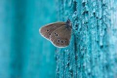 Schmetterling auf einem blauen Hintergrund lizenzfreie stockbilder