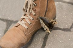 Schmetterling auf einem braunen Stiefel Lizenzfreie Stockfotos