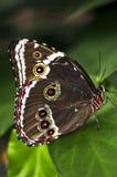 Schmetterling auf einer Anlage Stockfotos