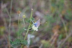 Schmetterling auf einer blühenden Blume stockbilder