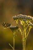 Schmetterling auf einer Blume Stockfotos