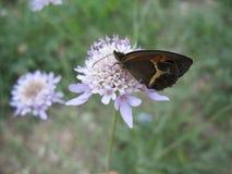 Schmetterling auf einer Blume Stockbild