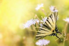 Schmetterling auf einer Blume lizenzfreie stockfotografie