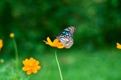 Schmetterling auf einer Blume Lizenzfreie Stockfotos