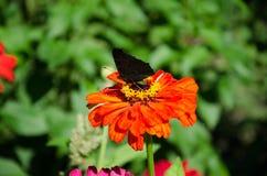 Schmetterling auf einer Blume im Garten lizenzfreie stockfotos