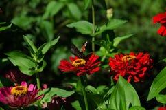 Schmetterling auf einer Blume im Garten stockfotografie