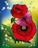 Schmetterling auf einer Blumenmohnblume Stockfoto