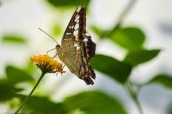 Schmetterling auf einer gelben Blume Stockbild