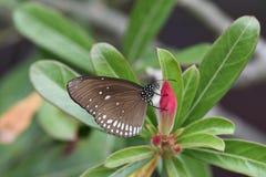 Schmetterling auf einer geschlossenen Blumenknospe stockfotografie