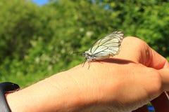 Schmetterling auf einer Hand. Stockbilder