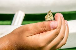 Schmetterling auf einer Kinderhand, Vertrauen Stockfotos