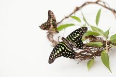 Schmetterling auf einer Niederlassung mit Grün verlässt auf Weiß Konzept von Energie Stockfotos