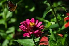 Schmetterling auf einer rosa Blume lizenzfreie stockbilder