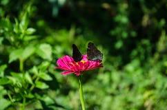 Schmetterling auf einer roten Blume lizenzfreie stockfotos