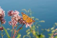 Schmetterling auf einer Wasserpflanze Lizenzfreies Stockfoto