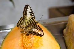 Schmetterling auf Früchten Stockfoto