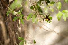 Schmetterling auf frischem grünem Blatt Lizenzfreie Stockbilder