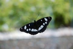 Schmetterling auf Glas stockfoto