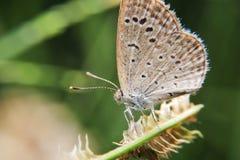 Schmetterling auf Gras lizenzfreie stockfotografie
