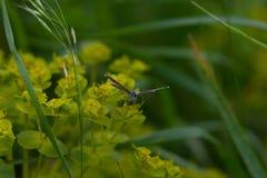 Schmetterling auf Gras Lizenzfreies Stockfoto