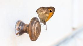 Schmetterling auf hölzernem Griff lizenzfreies stockbild