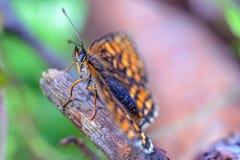Schmetterling auf hölzernem Stock Lizenzfreies Stockfoto