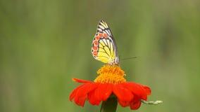 Schmetterling auf Job Stockfotografie