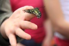Schmetterling auf Mädchen-Fingern Stockfoto